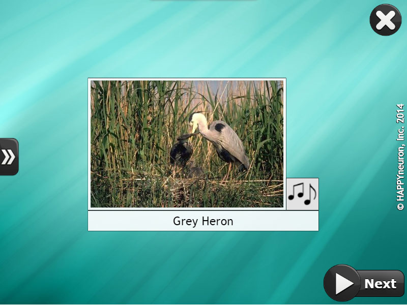 Screenshot of HappyNeuron Pro exercise Bird Songs